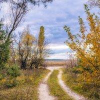 Осенний лес. :: Владимир