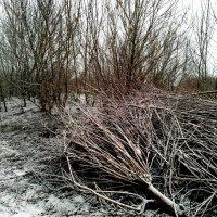 Деревья зимой :: Татьяна Королёва