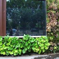 вертикальное озеленение :: tatiana