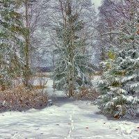 а лес  стоит загадочный.... :: Ольга Cоломатина