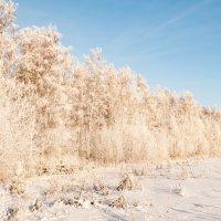 Зима :: saratin sergey