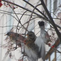 птицы :: Зинаида