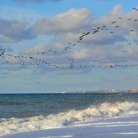 Зимнее море . :: Любовь