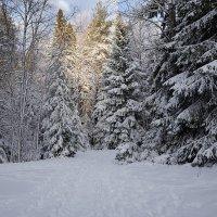 Возвращение скандинавской зимы :: Swetlana V