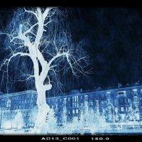 Одинокое дерево в ночной тиши. :: Юрий ГУКОВЪ