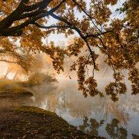 Про осень , свет и туман :: Александр Плеханов