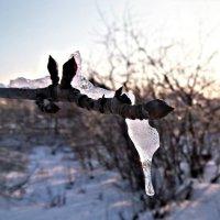 Зимняя природа :: Татьяна Королёва