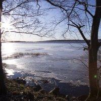 зимнее утро :: vika EGOROVA