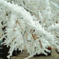 ледяные колючки :: Maryana Petrova