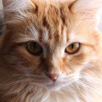 Кошка Белка :: Николай Холопов