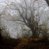 Осень в горах.... :: Юрий Цыплятников
