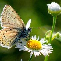 ещё про бабочек 5 :: Александр Прокудин