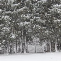 Тихо падал снег.... :: Mariya laimite