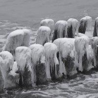 Сваи волнореза в зимних париках :: Маргарита Батырева