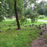 птицы :: Наталья А