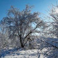 Зима-2018 Фото №3 :: Владимир Бровко