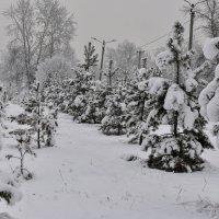 Зимняя аллейка. :: юрий Амосов