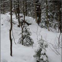 наконец-то зиму дали!) :: sv.kaschuk