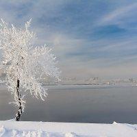"""Мороз её укутывал: """"Смотри, не замерзай!""""... :: Ричард Петров"""