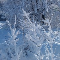 Причуды матушки зимы! :: Наталья