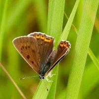 опять бабочки 3 :: Александр Прокудин
