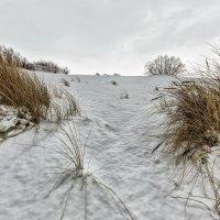 Зимой на дюне :: Владимир Самсонов