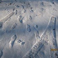 Следы на снегу :: Smit Maikl