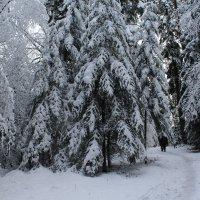 Прогулка по лесной дорожке.... :: Mariya laimite