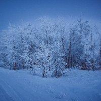 Лес... :: Влад Никишин