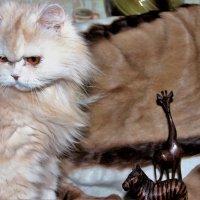 Кот и другие :: венера чуйкова