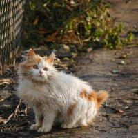 cat :: Влад