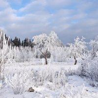 Морозный  день. :: Валера39 Василевский.