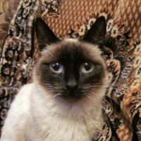 Портрет кота :: OLLES