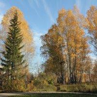 Скибка круглой аллеи :: Наталья Золотых-Сибирская