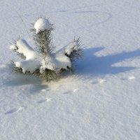 Следы на снегу :: Елена Шемякина