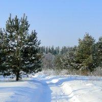 Зима :: Елена Шемякина