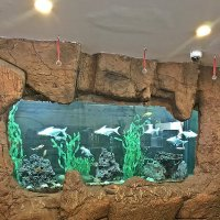 Вот и рыбки! :: Виталий Селиванов