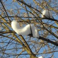 Снежные причуды :: Ольга Беляева