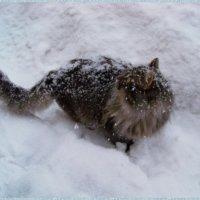 Снова этот снег... ? Сколько он будет идти... ? :: Любовь К.