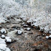 Первый снег :: Владимир Сковородников