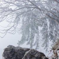 Туман над обрывом.. :: ирина )))