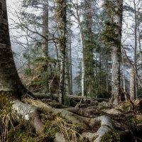 В лесу :: ирина )))