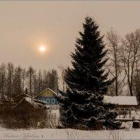 Зимнее солнце. :: Марина Никулина