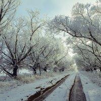 Зима :: Елена Ерошевич