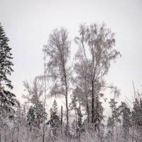 Морозный день :: Татьяна Симонова