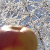 """Фотопоэма """"Яблочная зима"""" :: Алекс Аро Аро"""