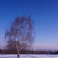 Белая на белом ... :: Лариса Корженевская