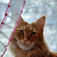 Мой кот Торин :: Елизавета Царук