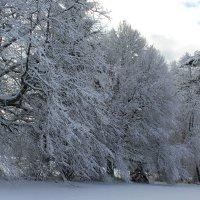 Прекрасным зимним днём.... :: Mariya laimite