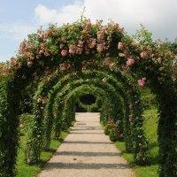 Отцвели в парке розы .... :: Николай Танаев